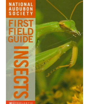 Insects (National Audubon Society First Field Guides)